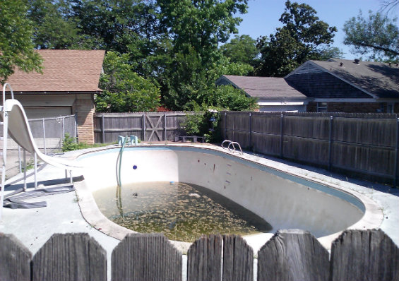 Poorly maintained swimming pools like Councilwoman Vonciel Jones Hill's could become breeding grounds for West Nile Virus-spreading mosquitoes, which mature from an egg in as few as three days. (Photo: Eric Nicholson/Dallas Observer)