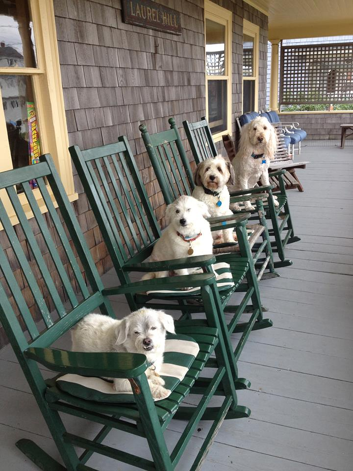 dogs-on-porch-7.2013
