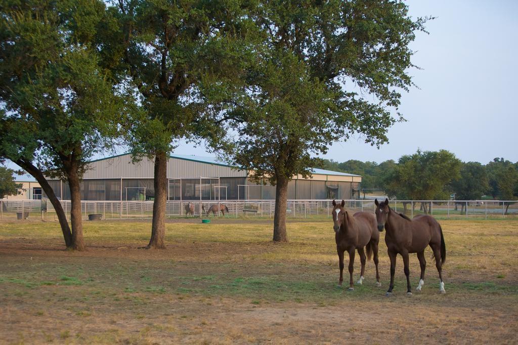 6-rocking-w-ranch-horses-and-arena