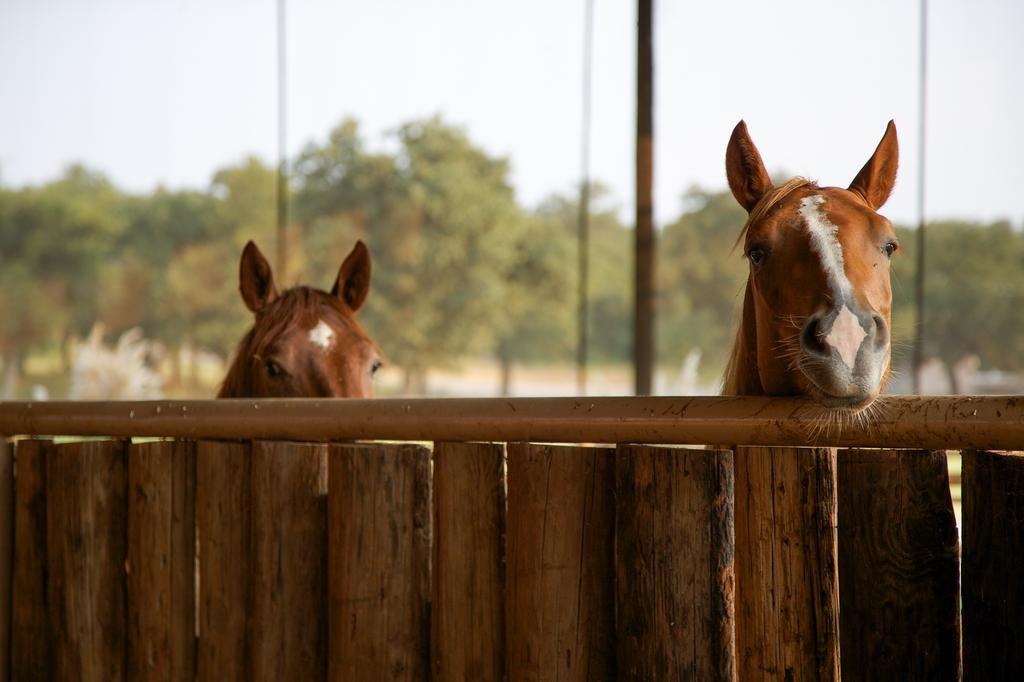 8-horses