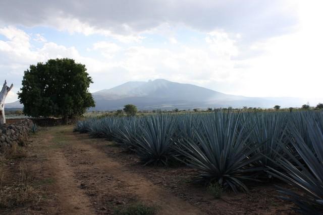 Tequila Sheela