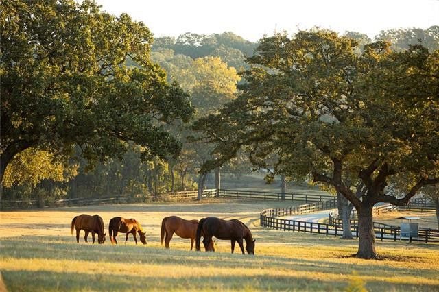 Find the Feel of Authentic Texas on Furst Ranch with Modern-day Cattle Baron Home | CandysDirt.com