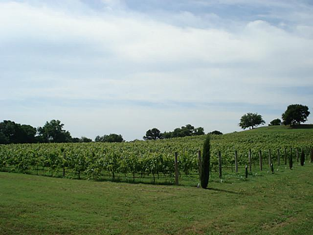 5312 State Highway 11 vineyard