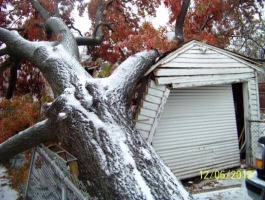 Brooks-tree-e1386610037520