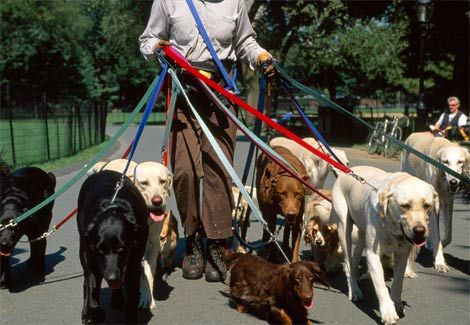 Professional Dog Walker