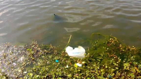 bag trash Lake Cliff